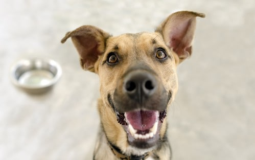 Happy Dog Bowl