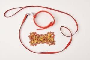 dog collar and leash near bone made of dog food