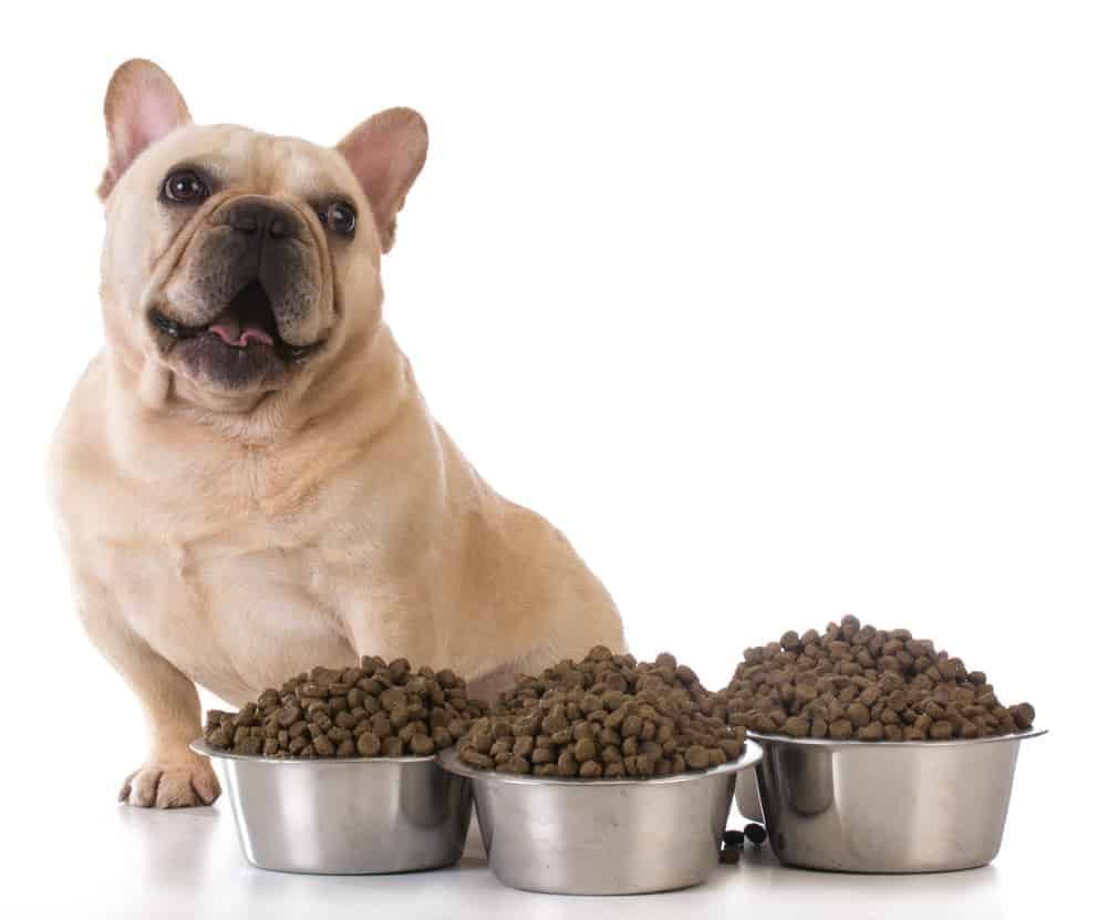 Feeding the dog - french bulldog sitting beside several bowls of dog food
