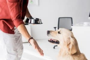 Cropped view of man with dog bowl giving hand to golden retriever