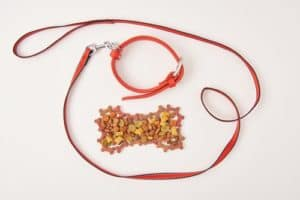 dog collar and leash near bone made of dog food