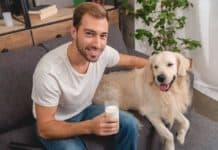 High angle view of smiling young man with glass of milk and adorable golden retriever dog looking at camera