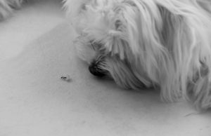The puppy is playing with ants