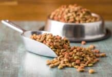 Dry pet food. Dry kibble food in scoop