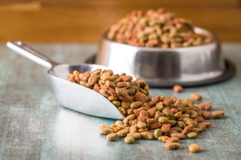 How Long Should a Dog Be on Puppy Food? This Guide Will Inform You