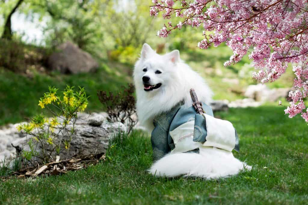 How Long Does It Take For A Dog To Poop After Eating Learning Canine Digestion M Dog