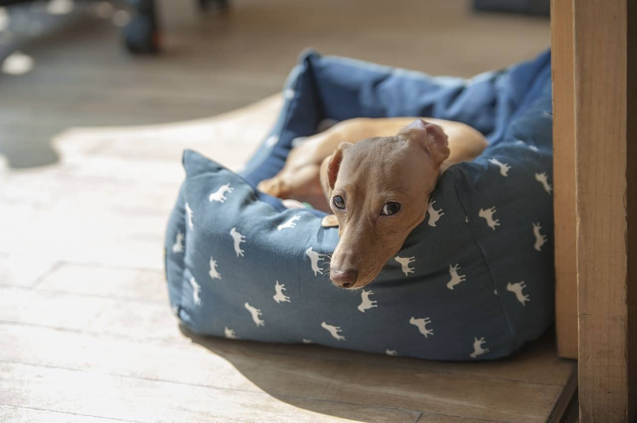 Dog lying on his bed space