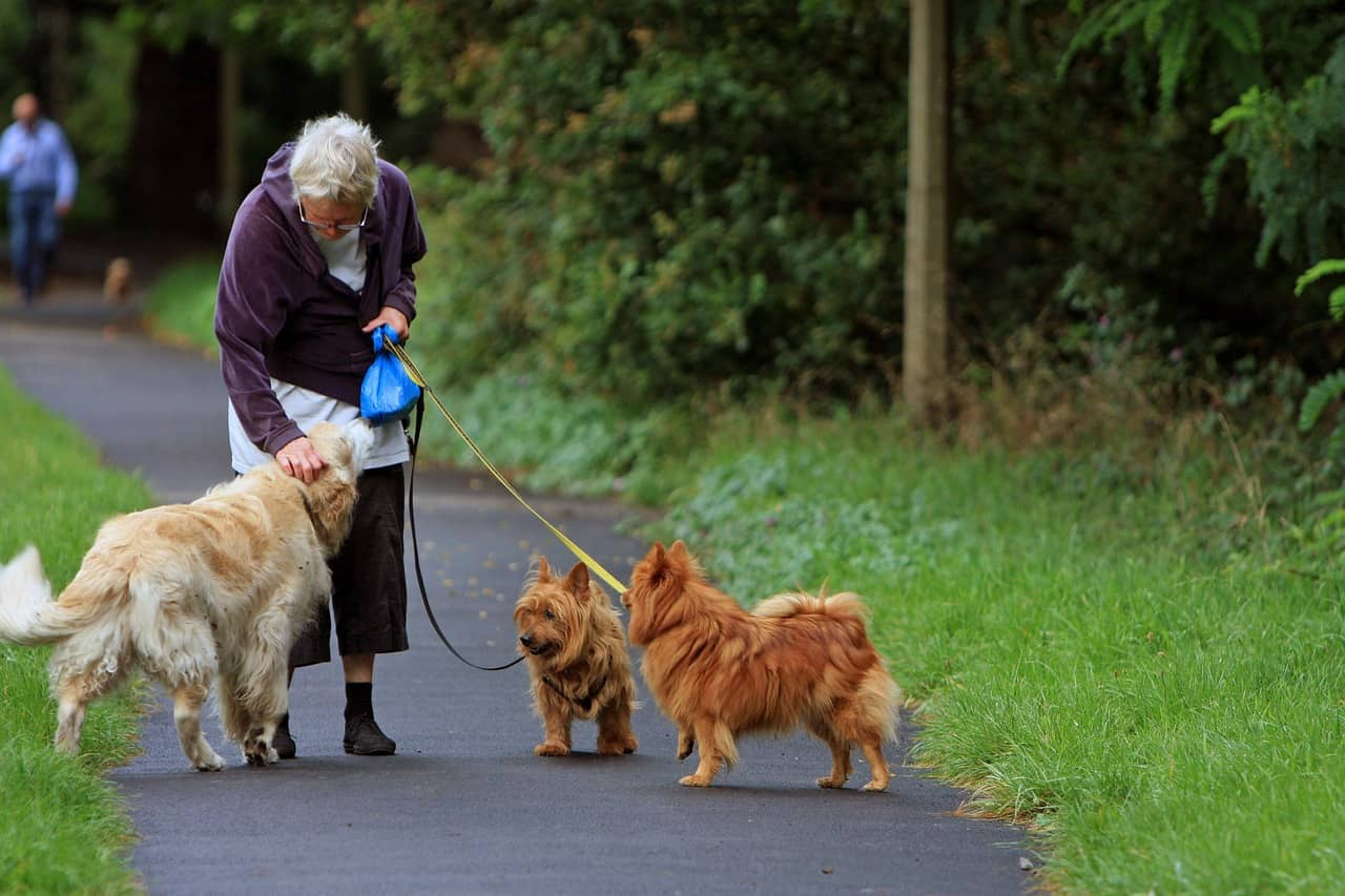 a dog walking with her master