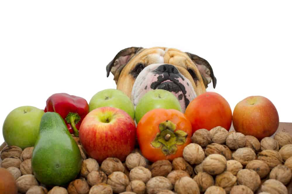 Autumn fruits nuts and vegetables with a bulldog