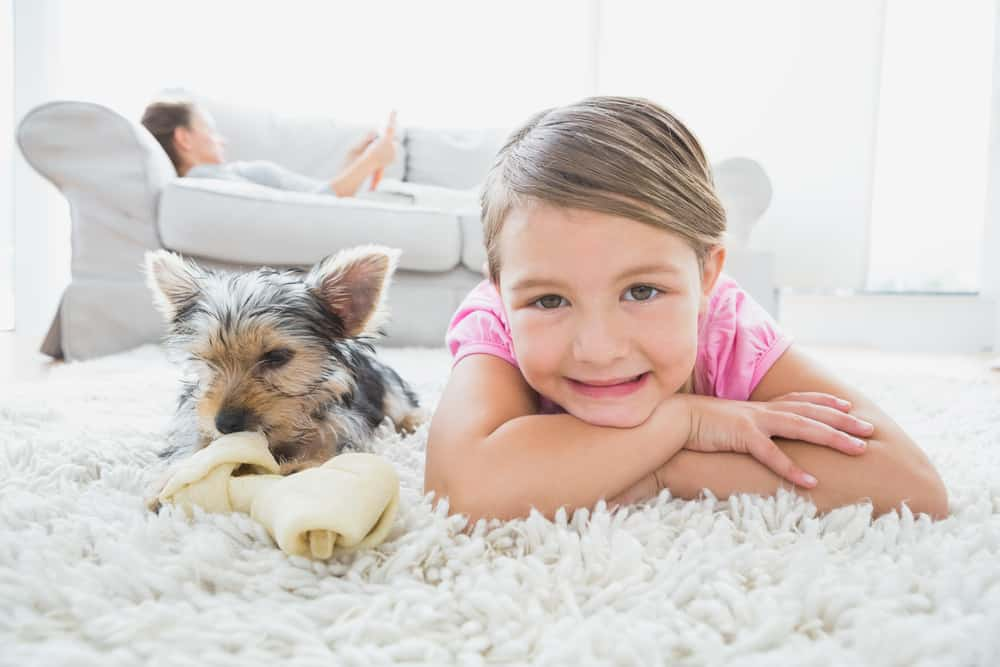 Little girl lying on rug with yorkshire terrier smiling at camer