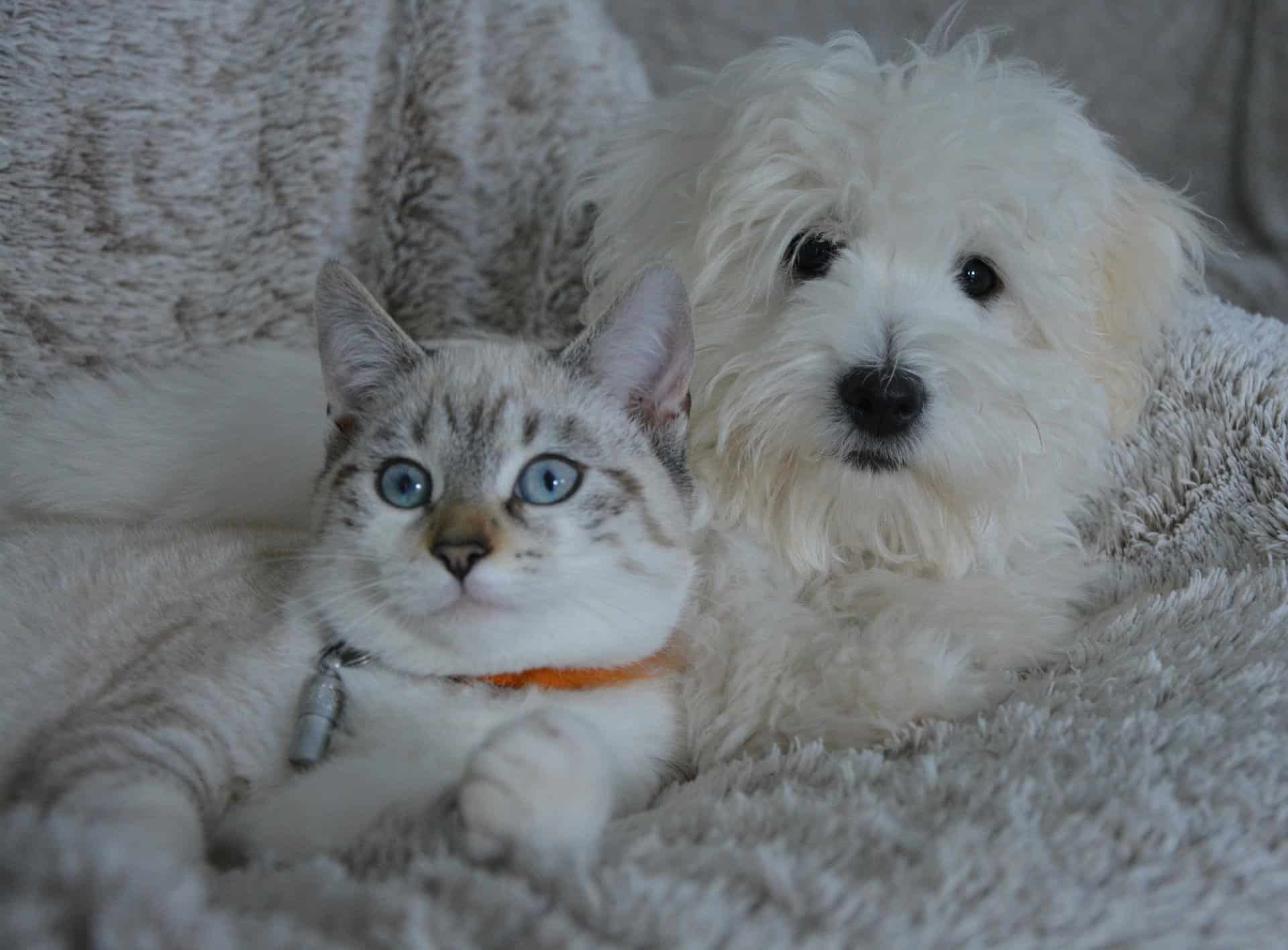 cats love dogs