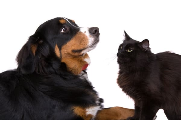 dog and cat staring at each other