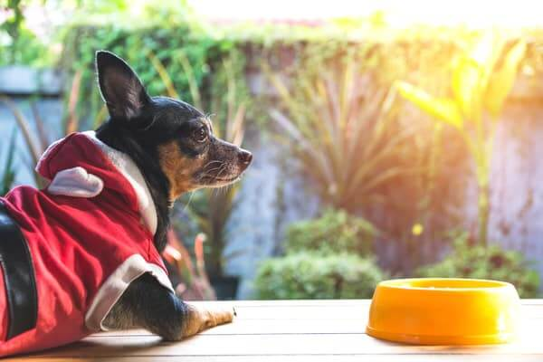 Cute small dog with bowl of dog food. Pets is feeding concept