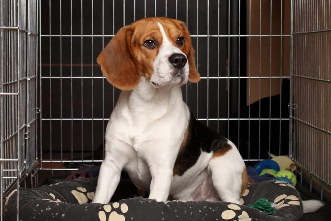 crate pad dog