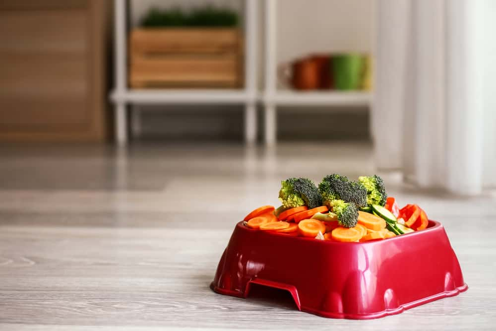 Pet bowl with fresh vegetables on floor