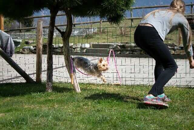 training my dog on how to jump the ropes